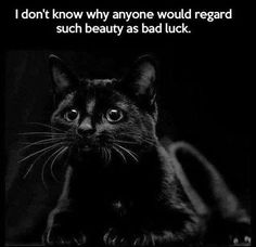 Black cats are the coolest and anyone who thinks they are unlucky is just an idiot.