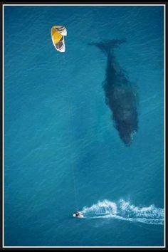 Mysteries of the deep blue sea! #ocean #whale #windsurfer