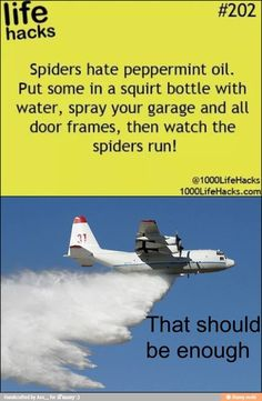cabin, spiders, airplanes, funny pictures, funni, spider spray, hous, birds, friend