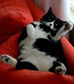 ꒰ ु ऀ•̀ ω •́  ऀ꒱ฅ˒˒  #neko #cat