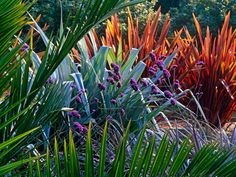 Sunset Spires -  Sundowner phormium, silver spear and the heads of verbena produce a glorious display of glowing color in the sunset.