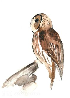 New print from Mai Autumn - Tawny Owl - 8x10 on sale for $19
