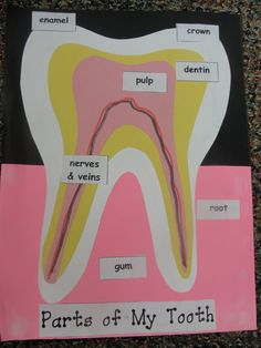parts of a tooth!