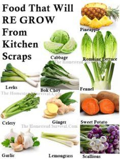 Foods that will Re-Grow from Kitchen Scraps  Have you tried growing your own already? food, garden