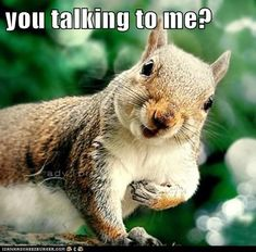 You Must be Nuts!