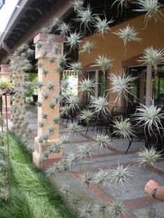 """air plant """"curtains"""" outside a commercial space. How cool is this?"""