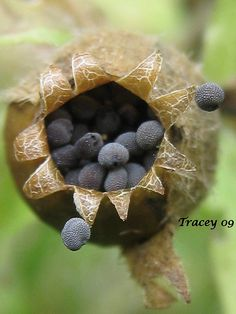 Seed Pod | Flickr