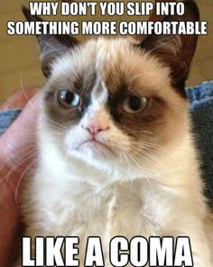 HAHAHAHA OMG best grumpy cat quote I've seen!
