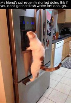 LOL! My Dakota would do this if I had a fridge with water.