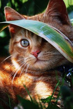Sweet Kitty in the Garden