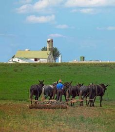 Amish farmer plowing the fields on a PA Dutch Country farm.