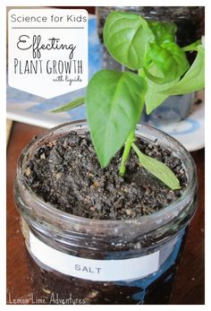 Experiments for Kids   Effecting Plant Growth