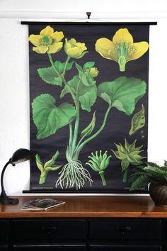 botanical posters