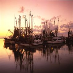 SHRIMP SEASON OPENS JUNE 1 ON THE GULFCOAST OF MISSISSIPPI...SHRIMP BOATS ARE A COMING..........WE ARE READY