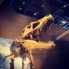 Natural History Museum of Utah in Salt Lake City, UT