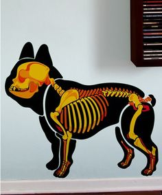 Dogskeleton Frenchie