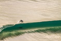 Surfing Dolphins by Brodie McCabe