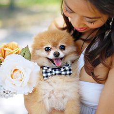 OMG — dog bow tie | 40 Genius No-Sew DIY Projects