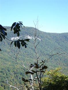 Pinnacle Pass Trail | Greenville South Carolina Hikes | Trails.com