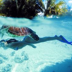 Swim with Sea turtles #Bucket List
