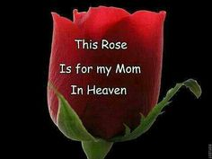 This rose is for my Mom in Heaven.