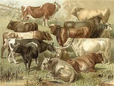 I want a vintage cow print such as this in my kitchen