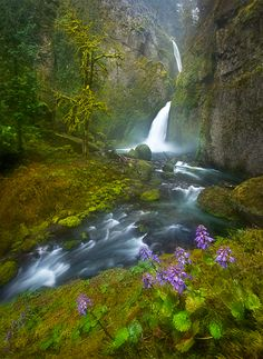 Wildflowers at Wahclella Falls in Oregon's Columbia River Gorge.
