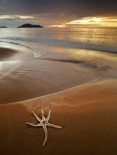 Starfish     Most amazing in the world