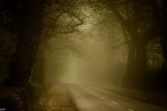 Light; Eerie - The mist and the early morning sun on this dirt road makes for an eerie picture.