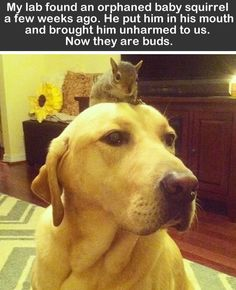 Squirrel and dog, they can be the best friends.