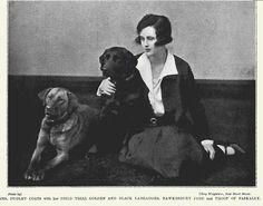 1925 Labrador Retrievers (Yellow and Black)