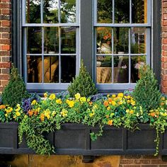 Show-Stopping Autumn Window Box | Dwarf Alberta spruce acts as a focal point for this fall-focused window box, while kales, pansies, and violas provide fall colors and textures. For a bit of romance, English ivy cascades over the sides of the box. | SouthernLiving.com miniature gardens, hous idea, outdoor, garden idea, windows, autumn window, container gardening, flower box, window boxes