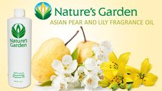 Asian Pear and Lily