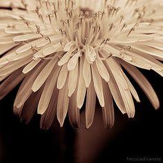 nude color flower