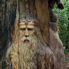 Old man in a tree carving