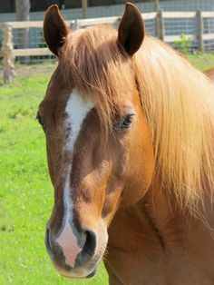Beechfork Ranch  Missies Little Star 4/9/2012