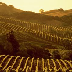 #Napa Valley is like a dream.