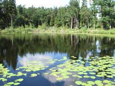 A beautiful pond in the forest near Gdansk in Poland