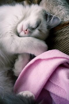 """Cats sleep soft."" --Unknown"