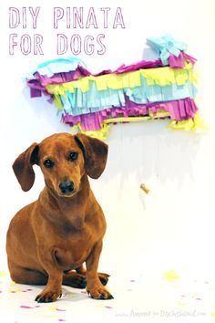 Birthday Week: DIY Dachshund Piñata for your Dog via Ammo the Dachshund