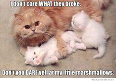 kitten, marshmallow, halloween costume ideas, funny pics, mother, halloween costumes, funny pictures, funny cats, cat memes