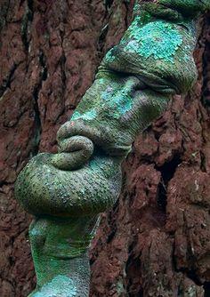 Nature's Face......A tree trunk. Botanic Garden, Australia
