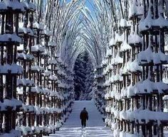 Snow Cathedral