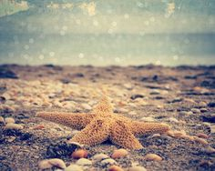 Star Fish Ocean Photography 8x10 Star Fish by GiaJuryPhotography, $23.50