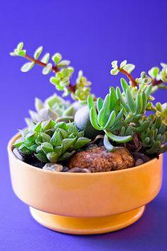 little succulent garden...
