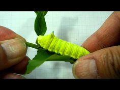 Squeaky Caterpillar