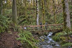 Eleven great winter hikes in Washington. #beaches #waterfalls #forests #birds #rivers #hiking