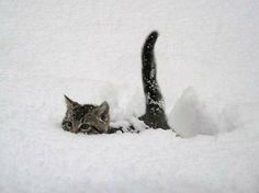 Deep snow hunter.