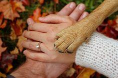 i heart lbi picture with engagement ring and dog paws | Pics shoot :) - Picture heavy : wedding IMG 2486 Edit