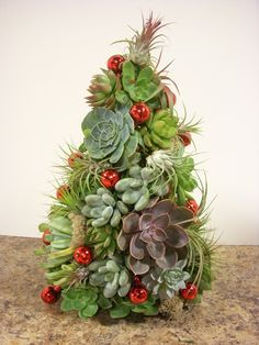 succulent and airplant christmas tree